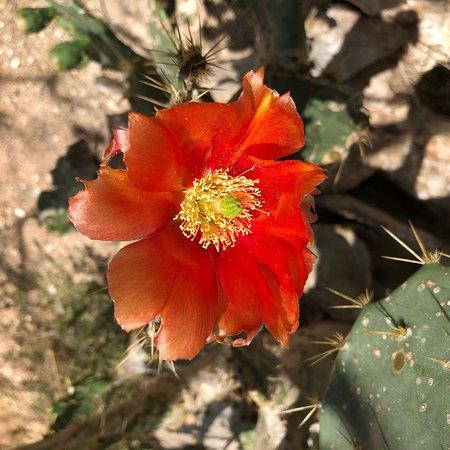 Bilde fra Hugh Ramsey Nature Park