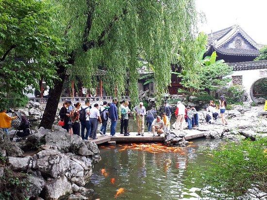 Yu Garden (Yuyuan) Φωτογραφία