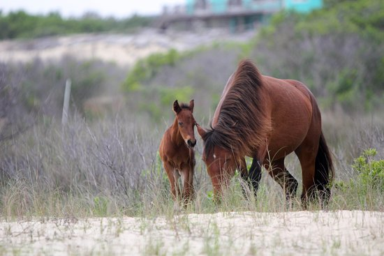 Wild Horse Adventure Tours: foal and mother