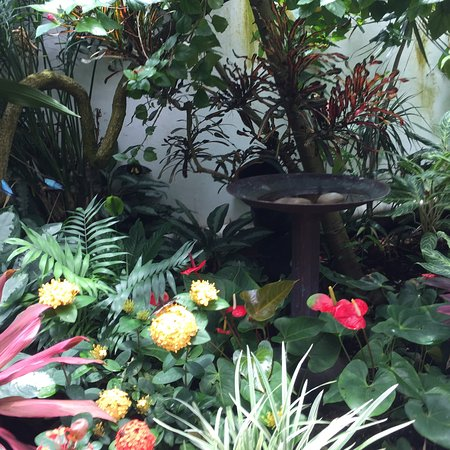 Key West Butterfly and Nature Conservatory Φωτογραφία