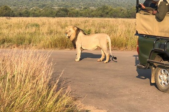 Safari in Full Day National Park a