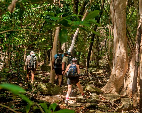 Tropical Treks Guided Bushwalks and Birdwatching