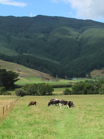 Linkwater, New Zealand: View back across the valley from the track
