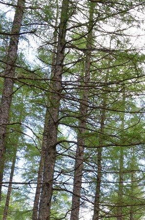 Onich, UK: The Woods