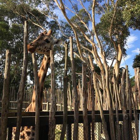 Wellington Zoo Φωτογραφία