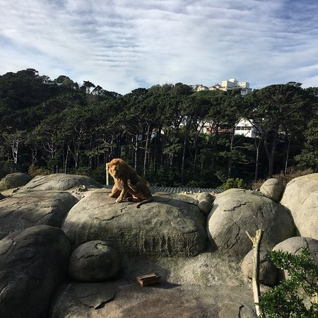 Wellington Zoo: Can feed these big boys, look into Lion eyes, so majestic!!
