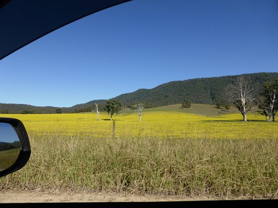 4WD Tag-Along & Passenger Tours: A field of gold