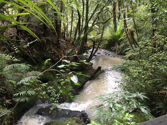 Hunua, New Zealand: Walk to Kauri Trees