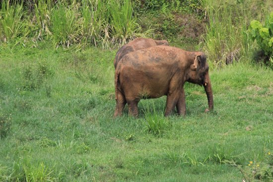 Pinnawala Elephant Orphanage: away from the orphanage