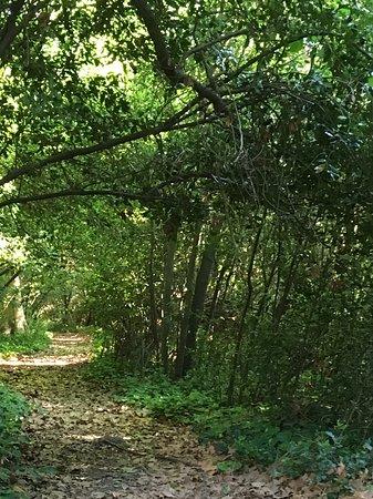 Chateau des Barrenques: Chemin forestier
