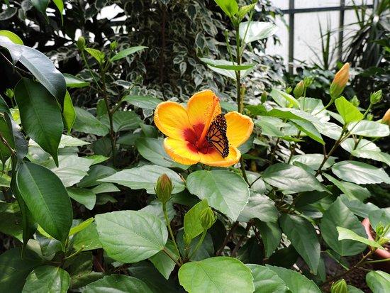 jardin des papillons mai 2018