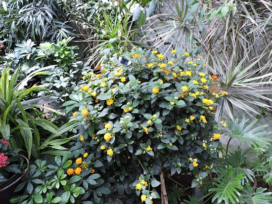 jardin des papillons mai 218