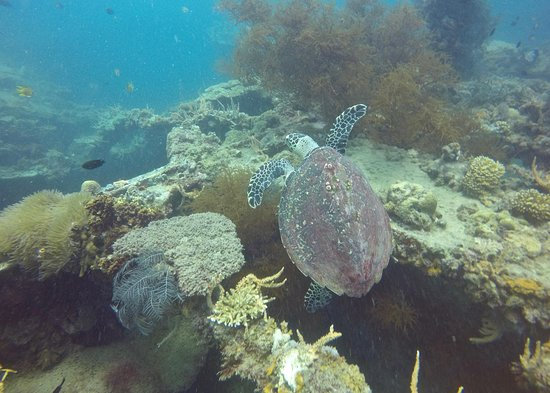 Submariner Diving Center: Turtle on the wreck