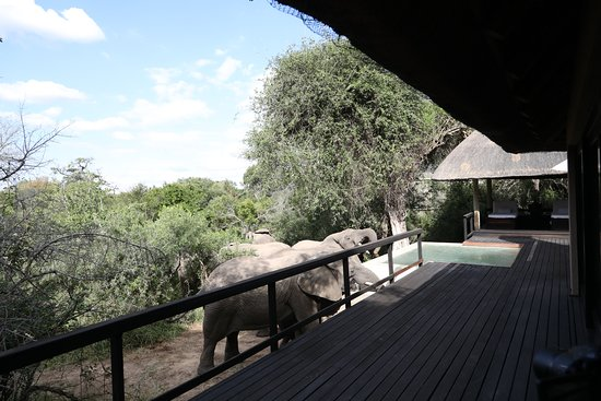 Royal Malewane: This looks like a great place to get a drink!