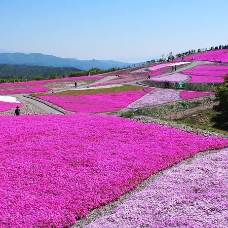 Toyone-mura, Nhật Bản: 茶臼山