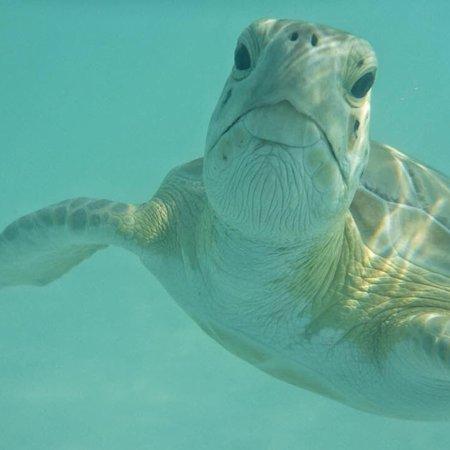 Paradise Bay Bahamas : photo0.jpg