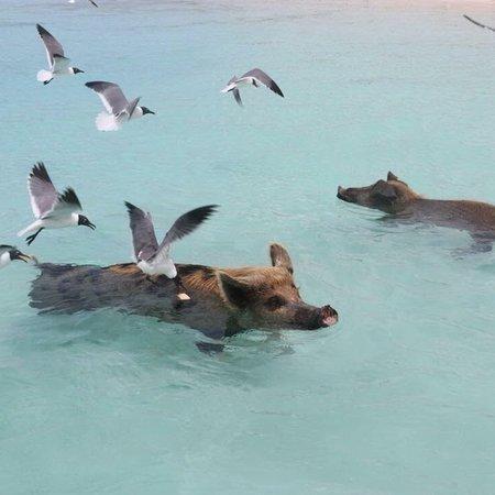 Paradise Bay Bahamas : photo1.jpg