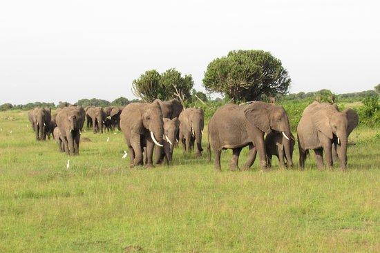 Instinct Safaris Limited: Queen Elizabeth Park