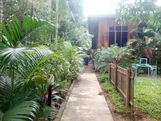 Chaungtha, Myanmar: The house and the restaurant in the garden