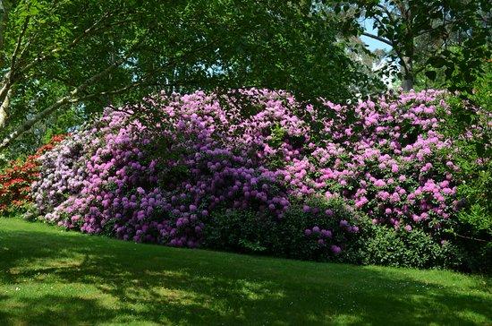 Combrit, Frankrijk: Haie de rhododendrons