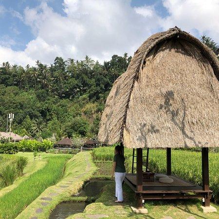 Mandapa, a Ritz-Carlton Reserve: Perfection...