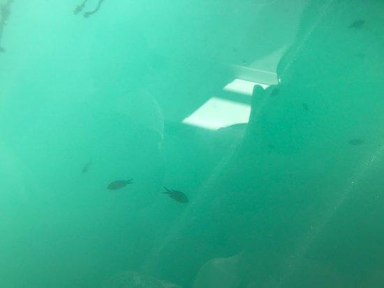 Nemo Sub