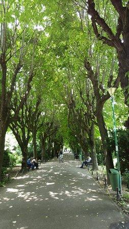 Cismigiu Gardens Φωτογραφία