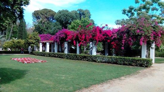 Parque de Maria Luisa: pergola avec bancs à l'ombre des bougainvilliers