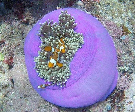 Bomba, Indonesien: nur ein kleiner Eindruck, was sich unter der Wasseroberfläche alles finden läßt..