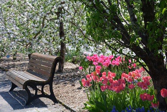Montreal Botanical Garden: Restful oasis