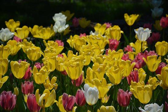Montreal Botanical Garden: Springtime tulips