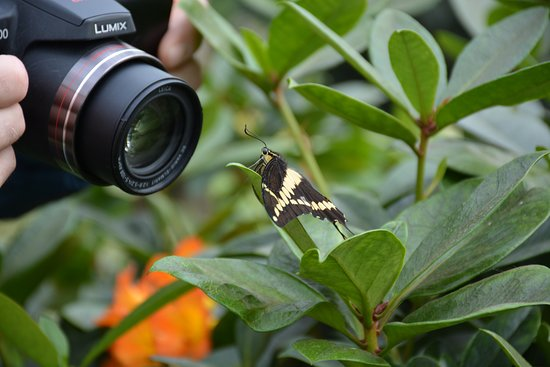 Montreal Botanical Garden: Butterfly exhibit in the Spring