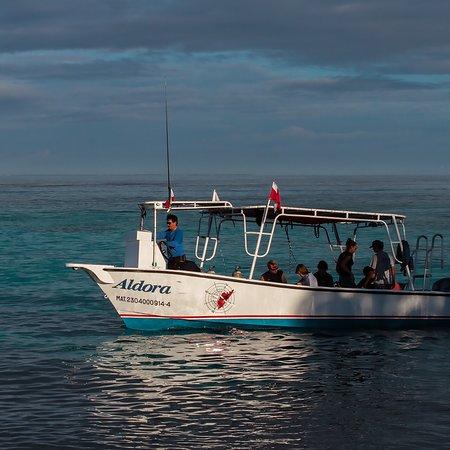 Aldora Divers Photo
