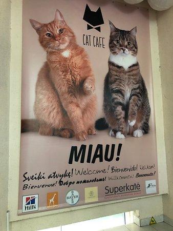 Cat Cafe Kačių Kavinė: Before you enter