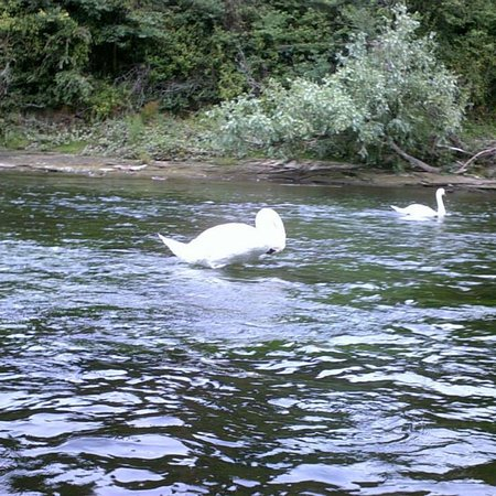 Ross on Wye Canoe Hire ภาพถ่าย