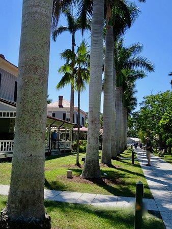 Edison and Ford Winter Estates: Palmenallee