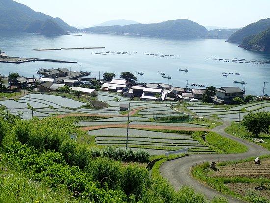 Hibiki Rice Terrace
