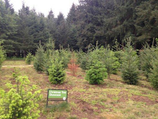 Oregon Garden Resort: One of the many demonstration gardens
