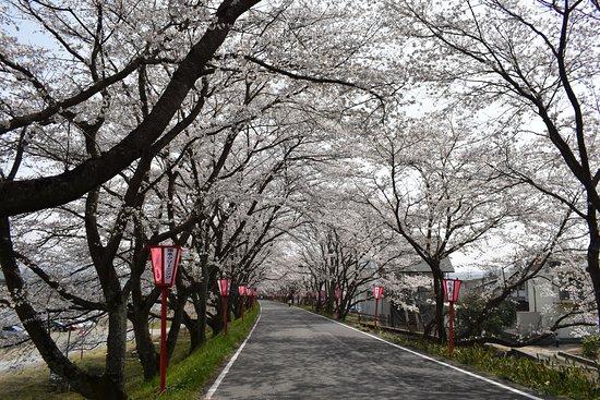 Kuse Sakura Tunnel