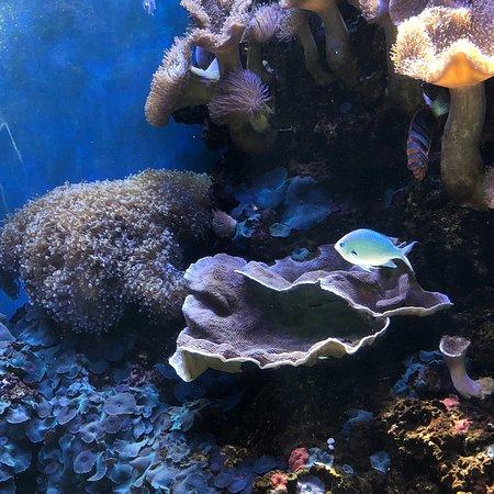 Waikiki Aquarium ภาพถ่าย