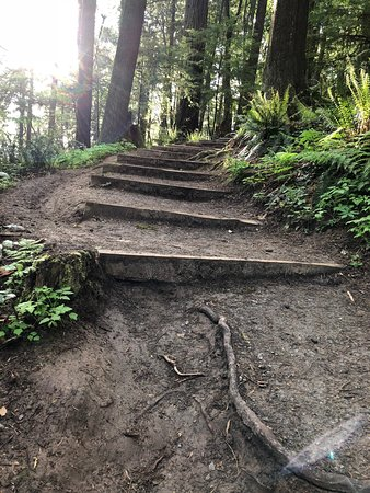 Forest Park: Steps to help you reach Pittock Mansion.