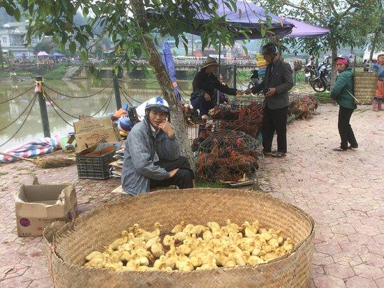 Bac Ha Market: アヒルの雛を売る