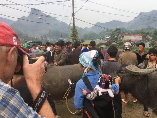 Bac Ha Market: 川向こうの水牛売り場
