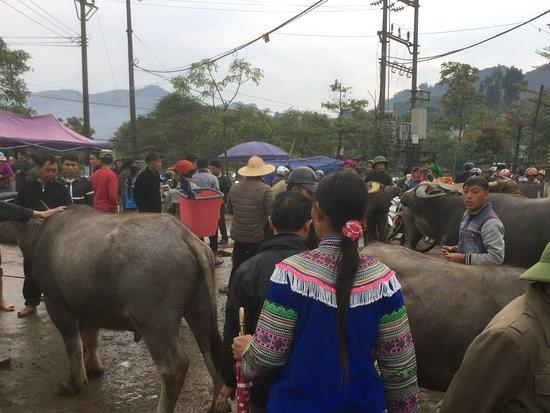 Bac Ha Market: 水牛の売り買い