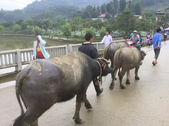 Bac Ha Market: 橋を渡って水牛売り場に行く