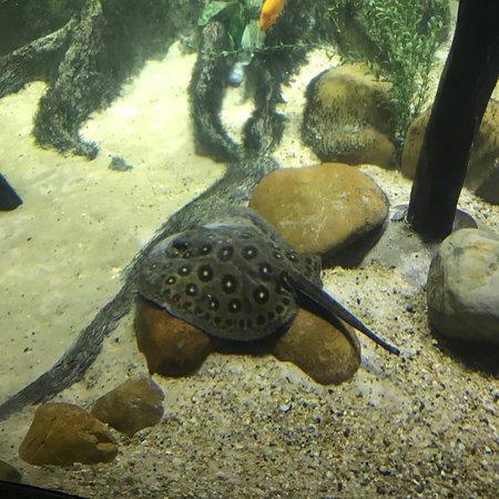 Sao Paulo Aquarium ภาพถ่าย