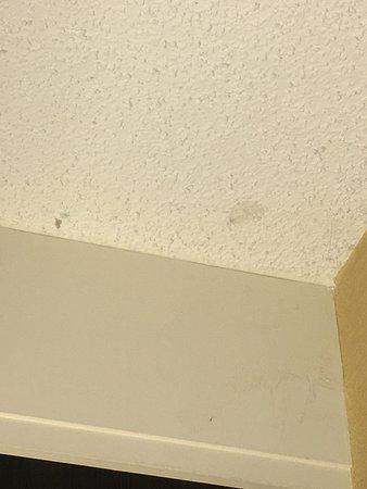 Colorado Springs Marriott: dirt, webs, dust in ceiling corners