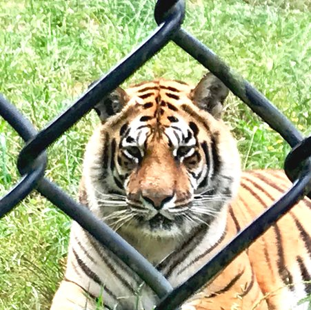 Locust Grove, GA: During the Wow Tour, there is only one fence between you and the animals