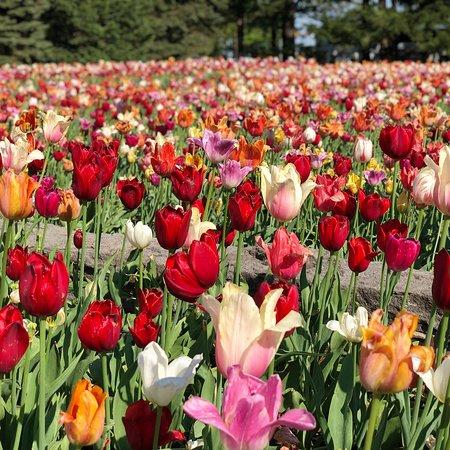 Montreal Botanical Garden Φωτογραφία