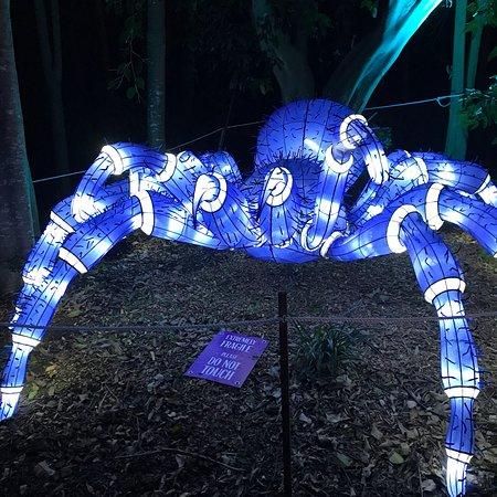 Taronga Zoo Φωτογραφία
